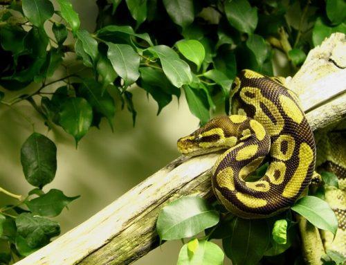 Dni Otwarte Funduszy Europejskich w Śląskim Ogrodzie Zoologicznym