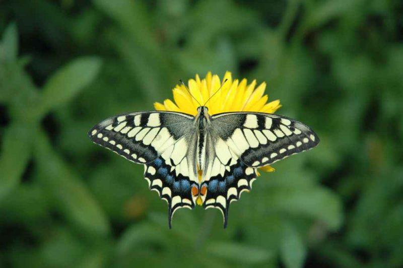 zwalczanie os i innych owadów